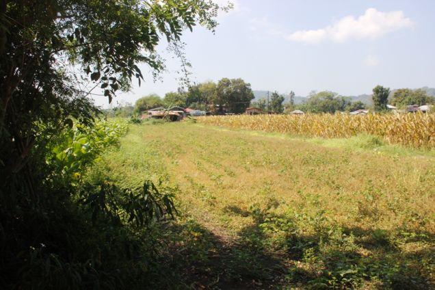 1,224 Sqm. Farm Lot for Sale, Balaoan, La Union, Ilocos - 9
