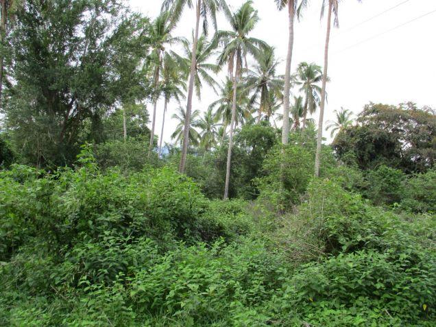 Farm lot in Barangay San Gregorio, Laurel, Batangas, vacant lot Batangas - 5