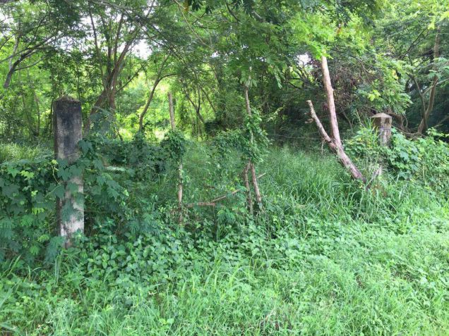 Industrial Lot for Sale, 48551sqm Lot in Puerto Princesa, Eckhart Ang - 2