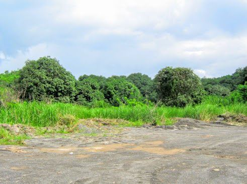 Ideal 227 Hectares for Industrial or Commercial at Floridablanca Pampanga - 8