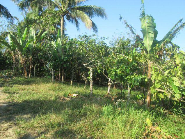 farm lot for sale near Tagaytay 554sqm at P1,600 per sqm - 3
