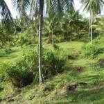 Agri-Business General Luna, Siargao, Surigao, Philippines - 4