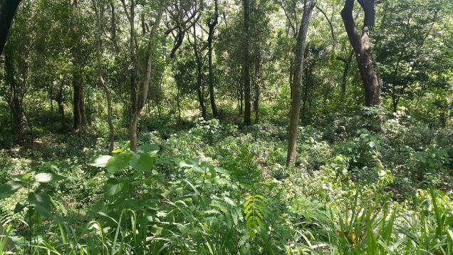 772 sqm Farm Lot for sale Havila Angono Rizal near Antipolo and Marikina City - 7