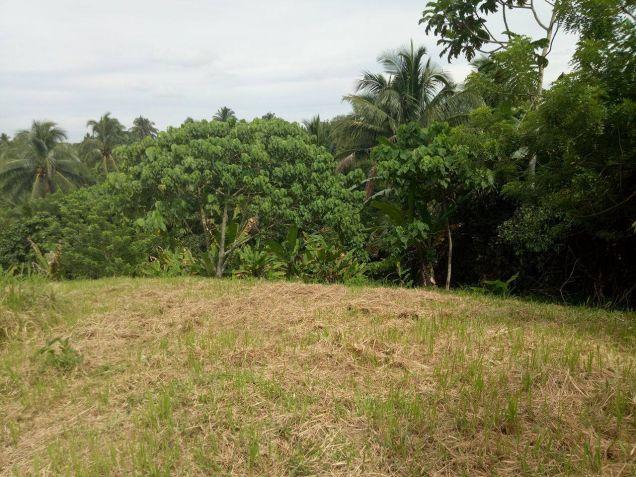 farm lot for sale near Tagaytay 1112sqm at P1,700 per sqm - 4