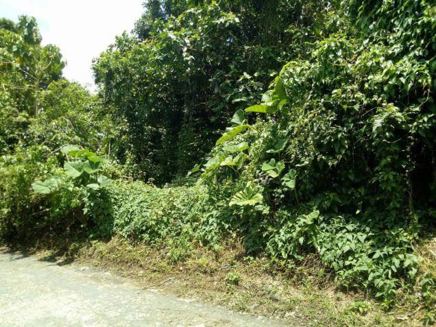 Overlooking Taal lot 3000 sqm in Laurel Batangas near Tagaytay - 9