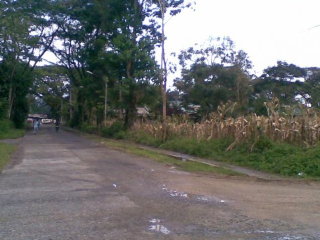 Lot for Rent, 4000sqm Lot in Manolo Fortich, Cedric Pelaez Arce - 4