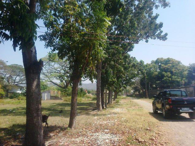 1.2 Hec Beach lot for sale in Paringao Bauang La Union - 1