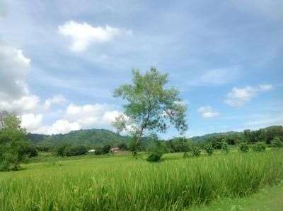 Farm Lot for Sale, 2.4 Hectares in Balaoan, Camiling, La Union, Capstone Realty - 0