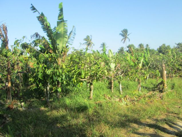 farm lot for sale near Tagaytay 554sqm at P1,600 per sqm - 2