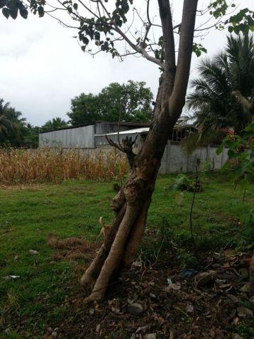 Farm Lot for Sale, 4188sqm Lot in Balingasag, Brgy. Cogon, Municipality of Balingasag, Cedric Pelaez Arce - 4