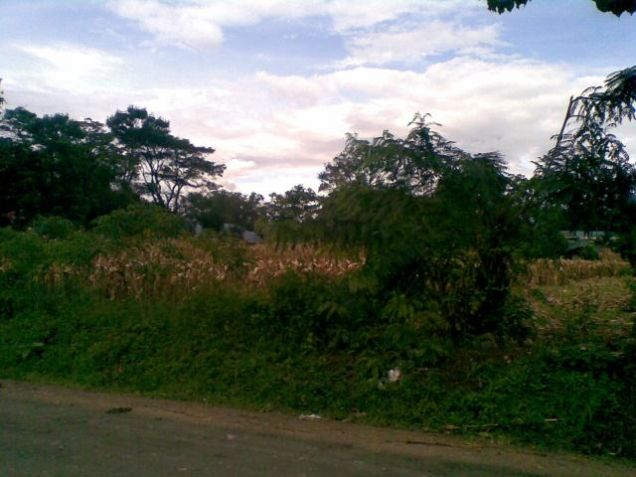 Lot for Rent, 4000sqm Lot in Manolo Fortich, Cedric Pelaez Arce - 1