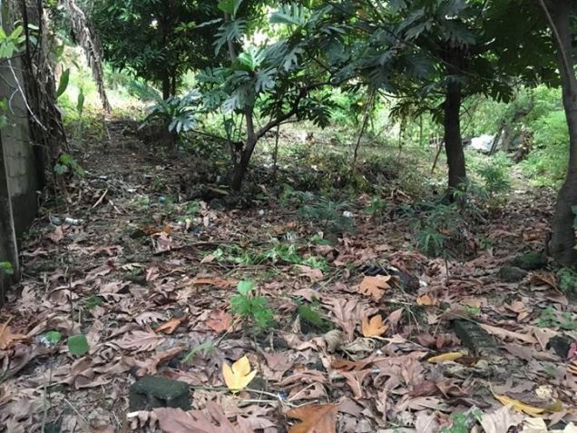 1000 Sq.m Lot for Sale in Boracay Island - 3