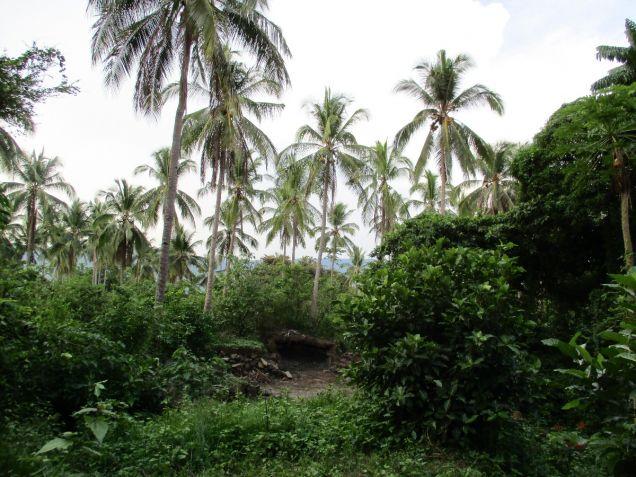 Farm lot in Barangay San Gregorio, Laurel, Batangas, vacant lot Batangas - 9