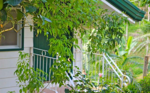 For Rent Resort House with Fabulous Gardens in Busay Cebu City - 4