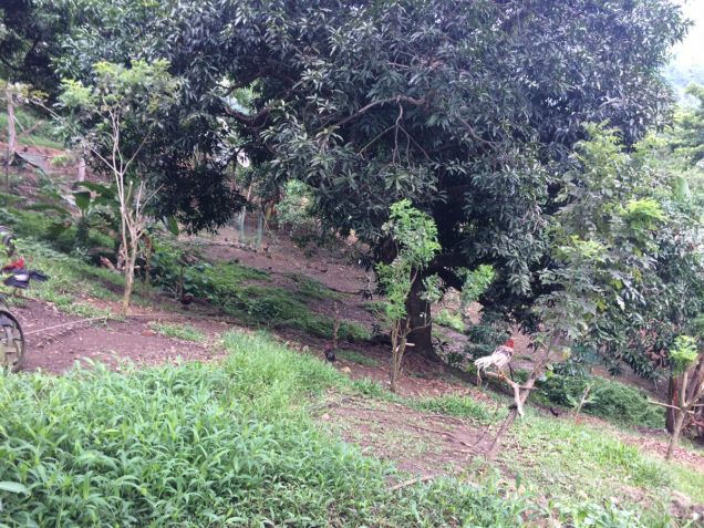 RUSH SALE: Farm Land ideal for agricultural or residential subdivision - 7