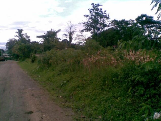 Lot for Rent, 4000sqm Lot in Manolo Fortich, Cedric Pelaez Arce - 5