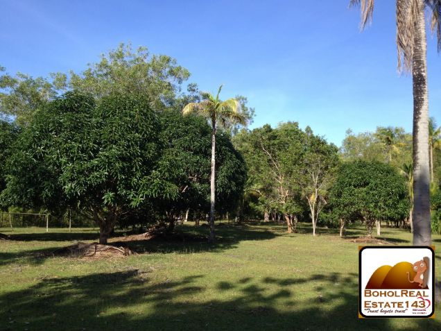 Affordable 1 hectare Danao, Panglao lot for Sale at 1,300 per sqm - 3