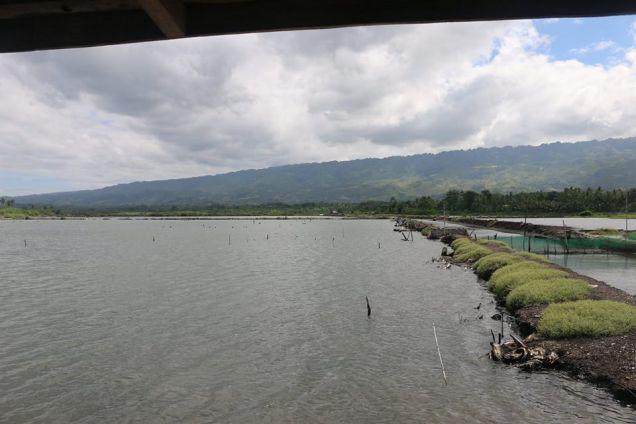 Fish Pond in Badian, Cebu - 5