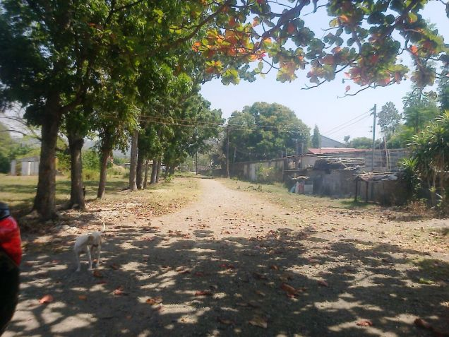 1.2 Hec Beach lot for sale in Paringao Bauang La Union - 4