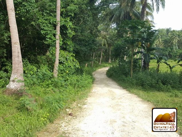 Affordable Corella Farmlot for sale at P280 per sqm - 0