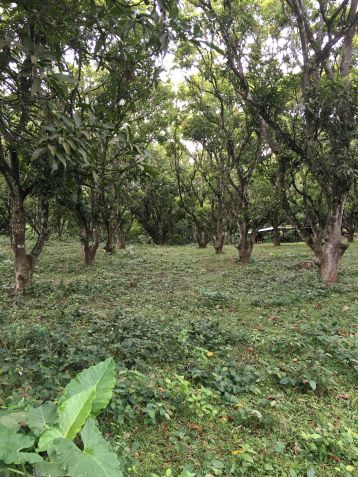 Farm Lot for Sale, 24416 sqm in Batangas City, Engr. Ednel Peter A. Madriaga - 9