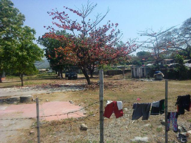 1.2 Hec Beach lot for sale in Paringao Bauang La Union - 8