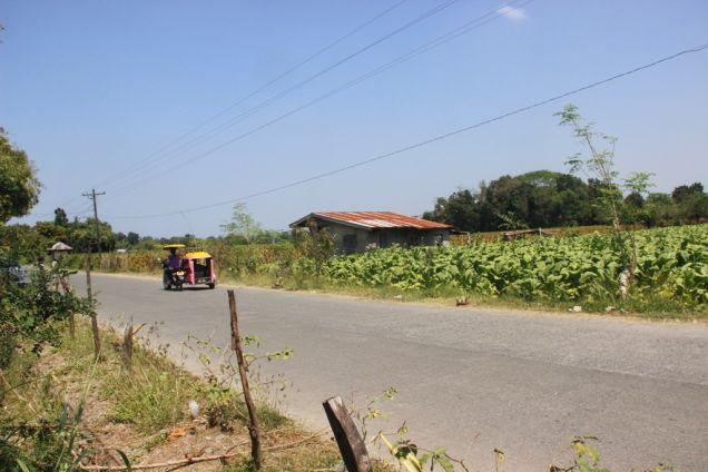 1,224 Sqm. Farm Lot for Sale, Balaoan, La Union, Ilocos - 3