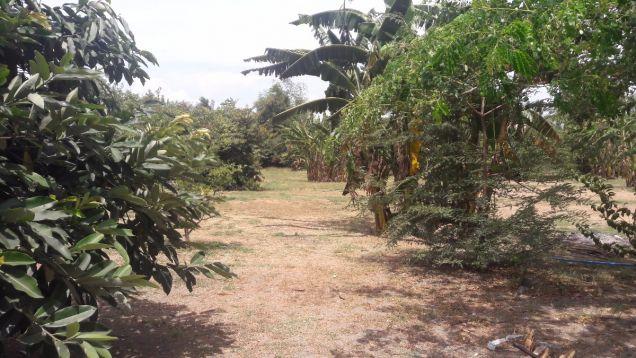 Commercial Lot for Sale, Amvel Business Park, Dr. A. Santos, Sucat, Paranaque - 0