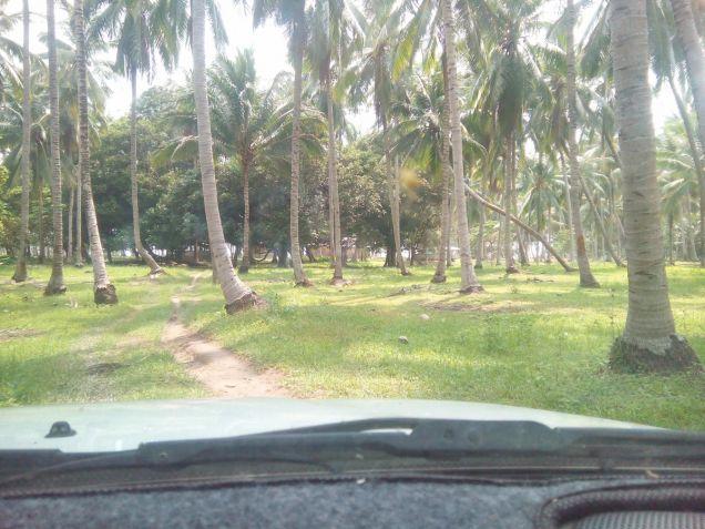 Beach Lot For Sale in Puerto Princesa, Palawan - 2