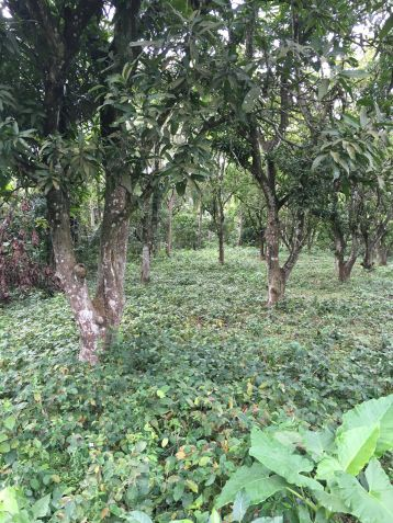 Farm Lot for Sale, 24416 sqm in Batangas City, Engr. Ednel Peter A. Madriaga - 0