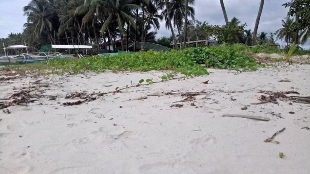 Beautiful Beach Lot at San Vicente Palawan with Sunset View - 0
