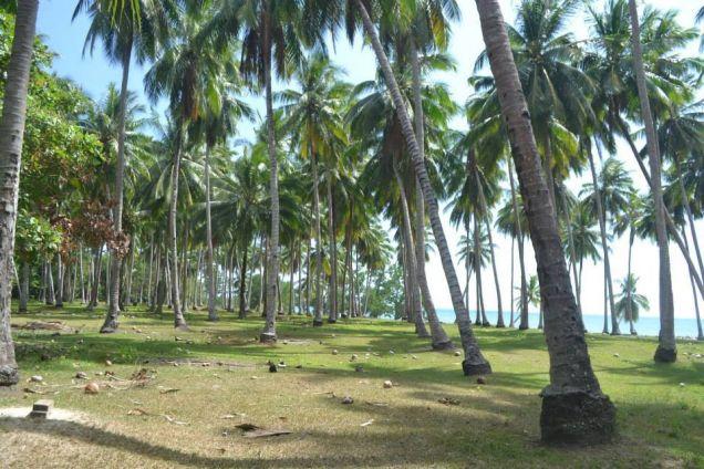 Beach Lot For Sale in Puerto Princesa, Palawan - 3