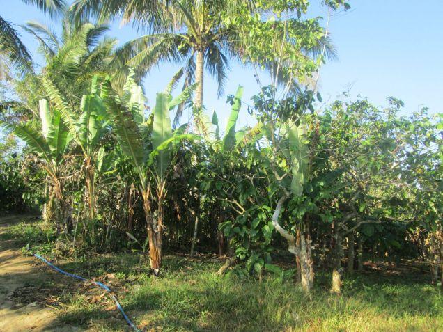 farm lot for sale near Tagaytay 554sqm at P1,600 per sqm - 1