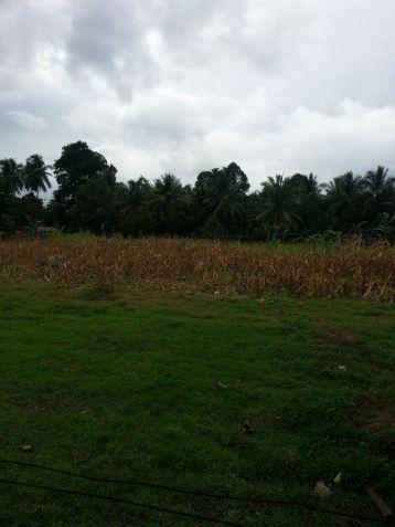 Farm Lot for Sale, 4188sqm Lot in Balingasag, Brgy. Cogon, Municipality of Balingasag, Cedric Pelaez Arce - 6