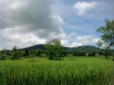 Farm Lot for Sale, 2.4 Hectares in Balaoan, Camiling, La Union, Capstone Realty - 1