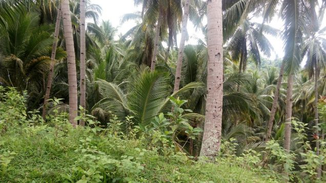 ID 14475 – Ocean View Lot for Sale - 1