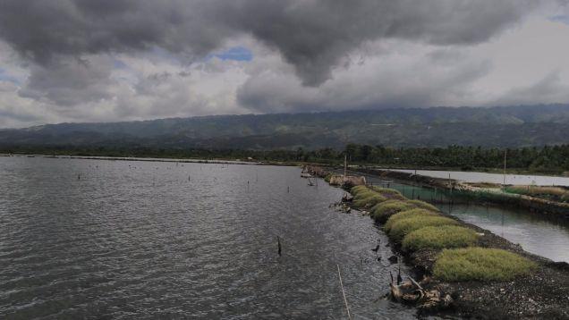 Fish Pond in Badian, Cebu - 8