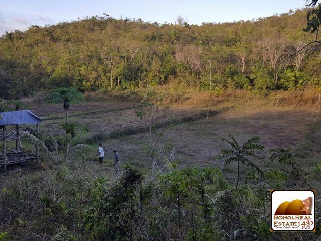 CHEAP Farmlot in Baclayon, Bohol - 3 hec at P150 per sqm - 6
