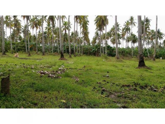 Bunawan Medium Industrial Lot for Sale - MDR2358 - 0
