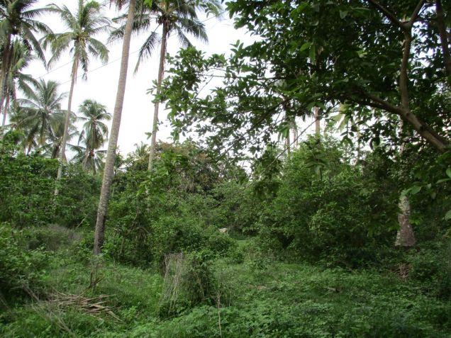 Farm lot in Barangay San Gregorio, Laurel, Batangas, vacant lot Batangas - 7