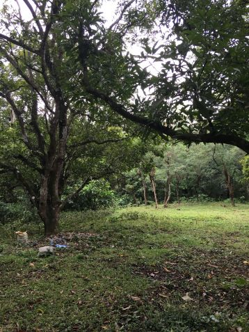 Farm Lot for Sale, 24416 sqm in Batangas City, Engr. Ednel Peter A. Madriaga - 8