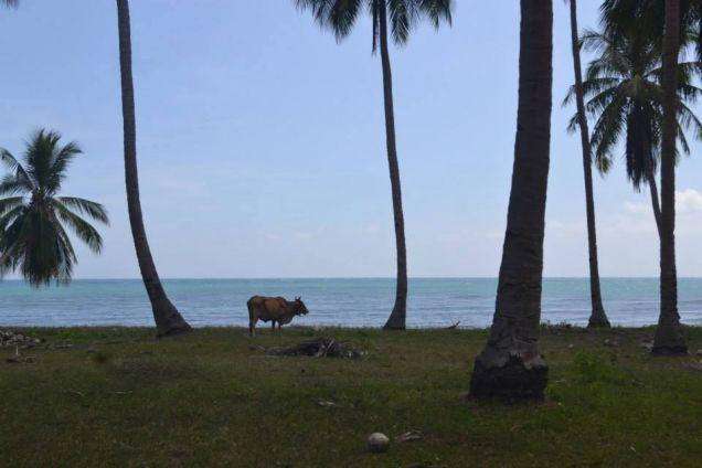 Beach Lot For Sale in Puerto Princesa, Palawan - 4