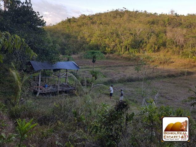 CHEAP Farmlot in Baclayon, Bohol - 3 hec at P150 per sqm - 5