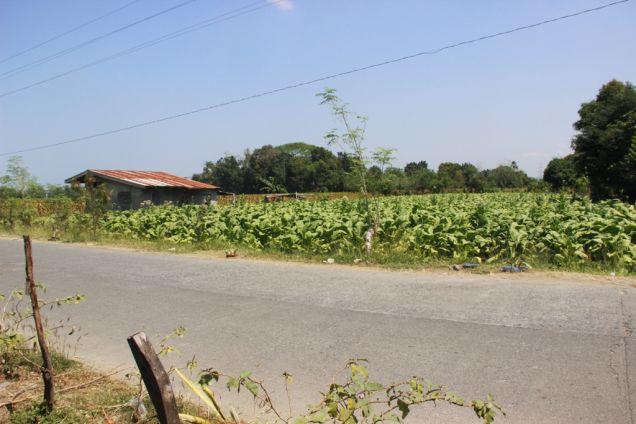 1,224 Sqm. Farm Lot for Sale, Balaoan, La Union, Ilocos - 7