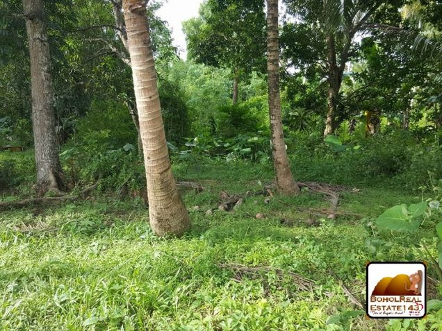 Affordable Corella Farmlot for sale at P280 per sqm - 1