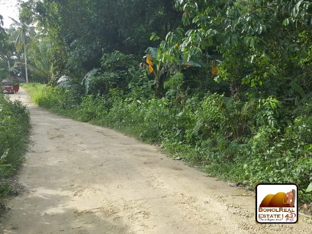 Affordable Corella Farmlot for sale at P280 per sqm - 6
