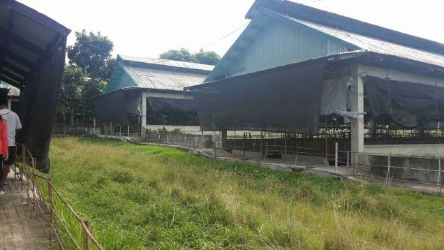 Escribano Livestock Farm for Sale ready for operation - 0