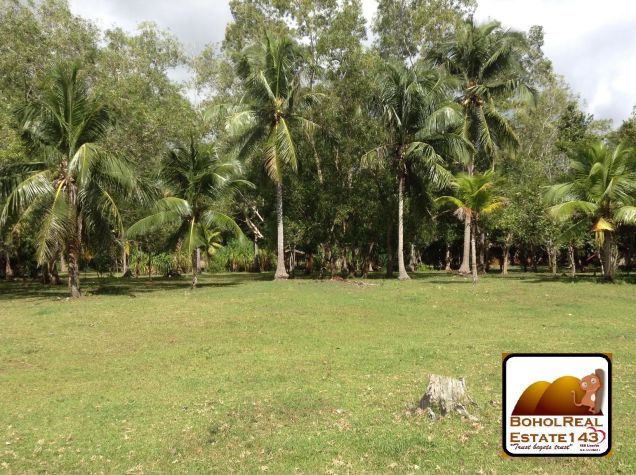 Affordable 1 hectare Danao, Panglao lot for Sale at 1,300 per sqm - 5