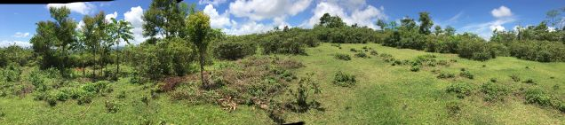 Farm Lot for Sale, 240000sqm Lot in Sampaloc, Engr. Ednel Peter A. Madriaga - 9