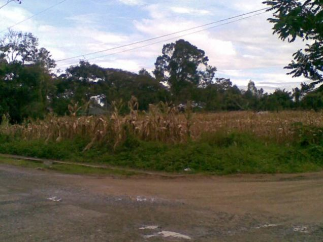 Lot for Rent, 4000sqm Lot in Manolo Fortich, Cedric Pelaez Arce - 0